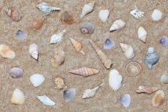 Conchiglie sul fondo della spiaggia di estate della sabbia Fotografia Stock