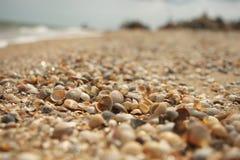 Conchiglie sulla riva del mare di Azov Fotografie Stock