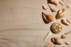 Conchiglie sulla sabbia della spiaggia, vista superiore immagine stock libera da diritti