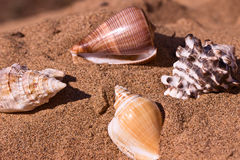 Conchiglie sulla sabbia di mare immagini stock