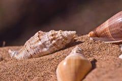 Conchiglie sulla sabbia di mare immagine stock