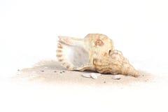 Conchiglie sulla sabbia isolata su bakcground bianco Fotografia Stock Libera da Diritti
