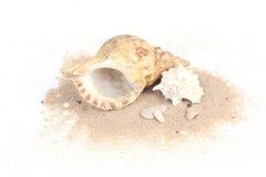Conchiglie sulla sabbia isolata su bakcground bianco Fotografia Stock