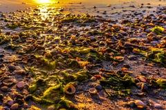 Conchiglie sulla spiaggia di Mar Nero fotografia stock libera da diritti