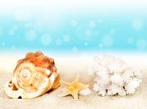 Conchiglie sulla spiaggia in spiaggia tropicale immagine for Disegni di casa sulla spiaggia tropicale