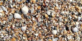 Conchiglie sulla spiaggia un giorno soleggiato Fondo immagine stock libera da diritti
