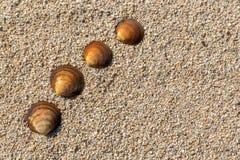 Conchiglie in una fila sulla sabbia Priorità bassa della spiaggia di estate Vista superiore Spazio per testo Fotografia Stock