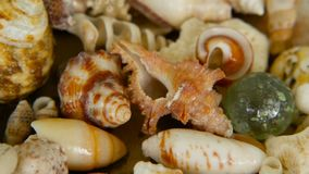 Conchiglie variopinte miste differenti come fondo Vari coralli, mollusco marino e coperture di pettine stock footage