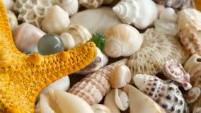 Conchiglie variopinte miste differenti come fondo Vari coralli, mollusco marino e coperture di pettine video d archivio