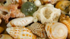 Conchiglie variopinte miste differenti come fondo Vari coralli, mollusco marino e coperture di pettine archivi video