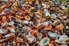 Conchiglie variopinte sulla spiaggia fotografia stock libera da diritti