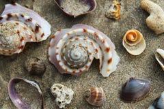 Conchiglie variopinte sulla spiaggia di sabbia Fotografia Stock Libera da Diritti