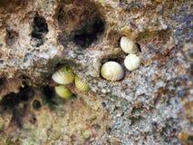 Conchs en roca fotografía de archivo