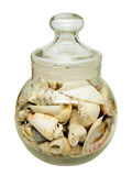 Conchs in a jar Royalty Free Stock Photos