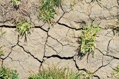 Conciencia ambiental, concepto de la ecología Calentamiento del planeta, tierra seca y e hierba verde Imagen de archivo