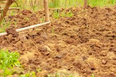 Concime dalle mucche su un campo agricolo, un mucchio di concime naturale per fertilizzare il suolo sul campo immagini stock