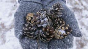 Conclusion de beauté d'hiver photographie stock libre de droits