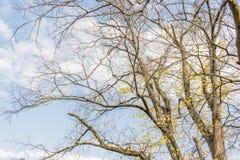 Conclusione dell'autunno dorato Fotografia Stock