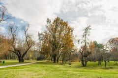 Conclusione dell'autunno dorato Immagini Stock