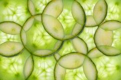 Concombre éclairé à contre-jour Image stock