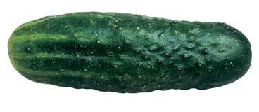 Concombre Photo libre de droits