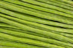 Concombre-chinois amer Photos libres de droits