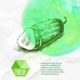Concombre coupé en tranches frais tiré par la main Photos libres de droits