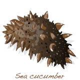 Concombre de mer illustration libre de droits