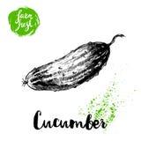 Concombre entier de style tiré par la main de croquis Affiche fraîche de légumes de ferme de vecteur Image libre de droits