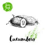 Concombre entier de style tiré par la main de croquis et moitié de concombre Affiche fraîche de légumes de ferme de vecteur Images libres de droits