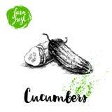 Concombre entier de style tiré par la main de croquis et moitié de concombre avec la tranche Affiche fraîche de légumes de ferme  Images libres de droits
