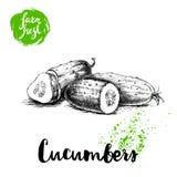 Concombre entier de style tiré par la main de croquis et moitié de concombre avec la tranche Affiche fraîche de légumes de ferme  Photos stock