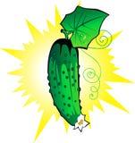 Concombre frais illustration de vecteur