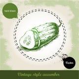 Concombre frais coupé en tranches tiré par la main Images stock