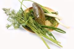 Concombre légèrement salé avec des verts Photos stock
