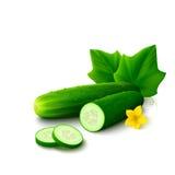 Concombre sur le fond blanc Image stock