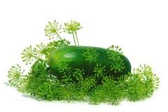 Concombre vert 4 Photos libres de droits