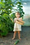 Concombres de cueillette d'enfant en serre chaude Image stock