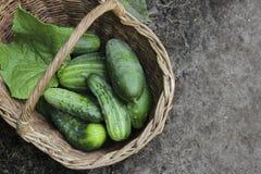 Concombres de récolte dans un panier wattled Images stock