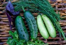 Concombres et herbes frais Photos libres de droits