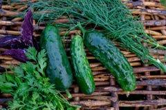 Concombres et herbes frais Images stock