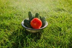 Concombres et tomate sous des baisses de pluie Image stock