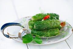 concombres Frais-salés sur le tamis d'émail de vintage Images libres de droits