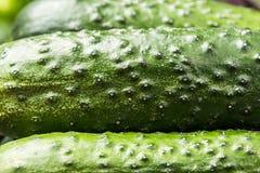 Concombres juteux frais, fond Légumes verts photos stock