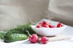 Concombres, radis et herbes Image stock