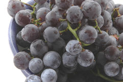 Concord grapes Royalty Free Stock Images