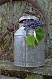 Concord Grapes Stock Image