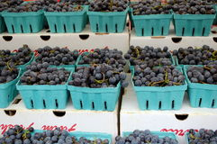 Concord Grapes Royalty Free Stock Photo