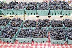 Concord Grapes. Fresh sweet concord grapes for sale in the outdoor farm market in autumn Royalty Free Stock Photo