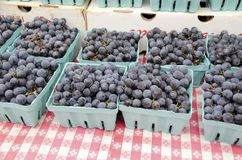 Concord Grapes. Fresh sweet concord grapes for sale in the outdoor farm market in autumn Royalty Free Stock Images